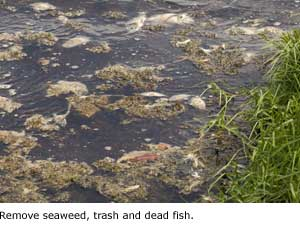 Remove seaweed.