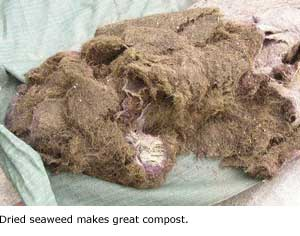 compost seaweed.